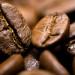 پخش عمده دان های قهوه ملو