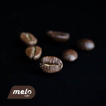قهوه دان تورینو