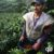 درباره قهوه کلمبیا و چشم اندازهای پیشرو