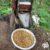 قهوه پاپو آ گینه نو