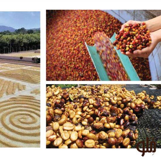 انواع فراوری و روست قهوه