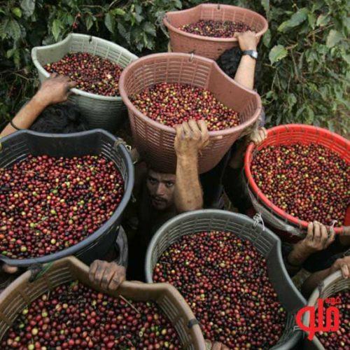 تولیذ کنندگان قهوه