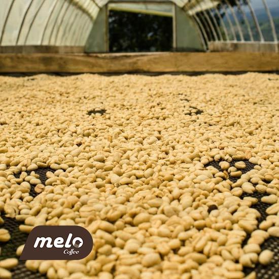 فرآوری قهوه: قهوه شسته شده چیست و چرا انقدر محبوب است؟