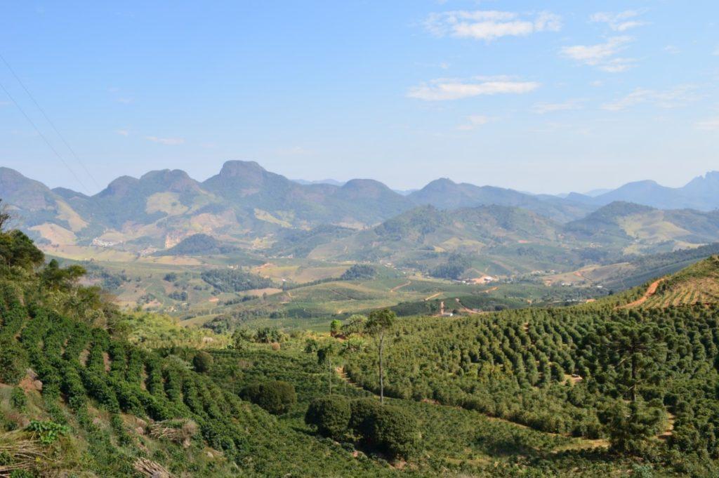 تعدادی از مزارع قهوه، منطقه ماتاس د میناس، ایالت میناس گرایس. عکس: نیکلاس یامادا