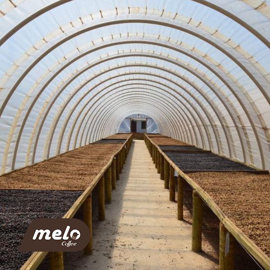 قهوه بلو هوریزونته برزیل
