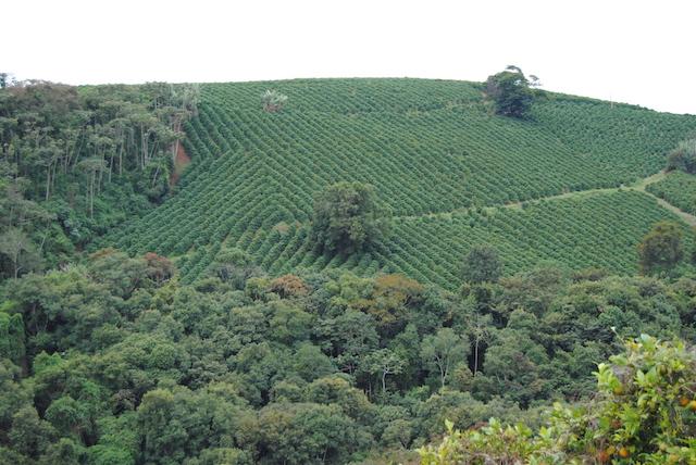 مزرعه قهوه در برزیل
