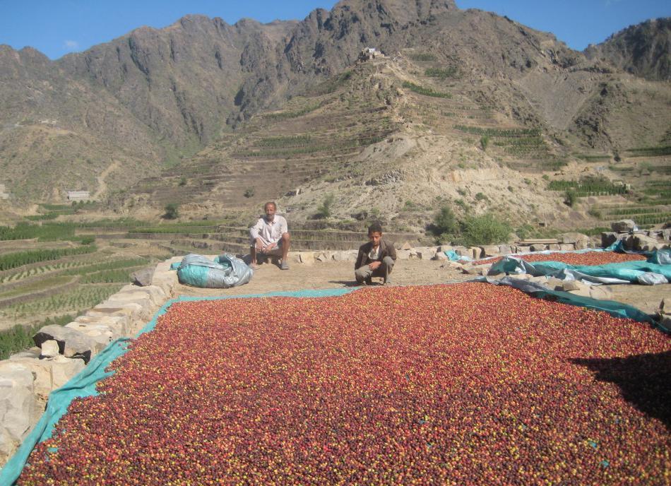 قهوه موکا یمن