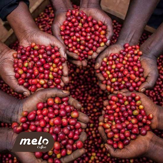 کنیا AA ، سوپریمو کلمبیا: شناختن گریدینگ ( درجه بندی ) قهوه