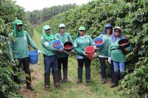 کارگران به صورت گزینشی میوه های قهوه آکایا را در Fazenda Nossa Senhora Aparecida می چینند