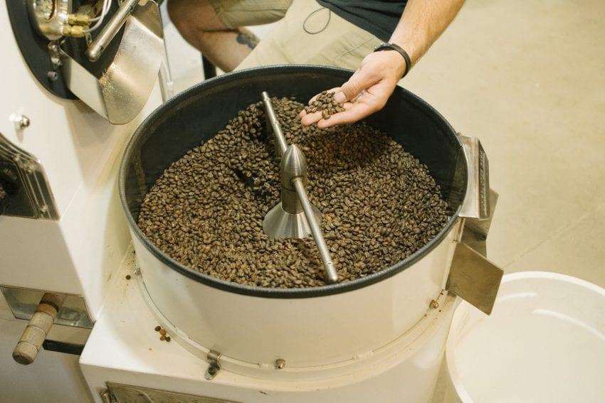 یک روست دهنده ، دانه های تازه برشته شده قهوه را بررسی می کند