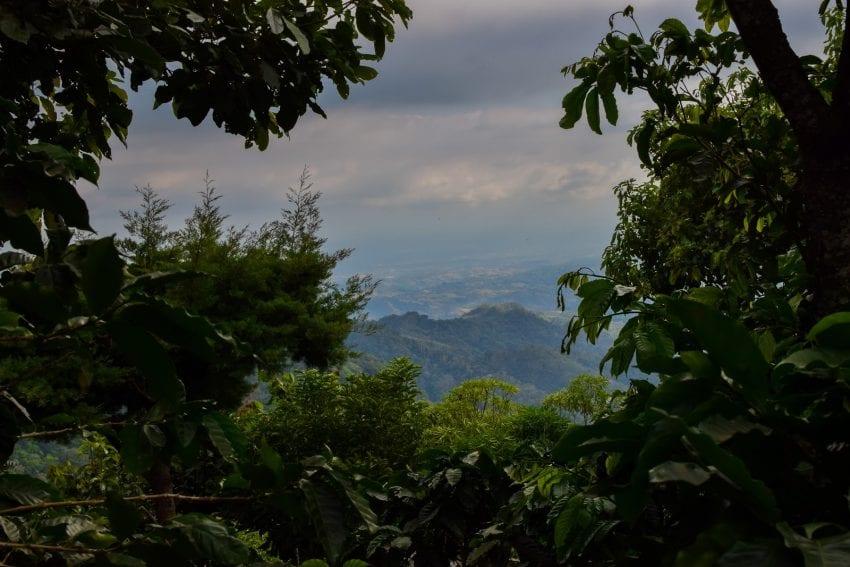 چشم اندازی از یک مزرعه قهوه در السالوادور