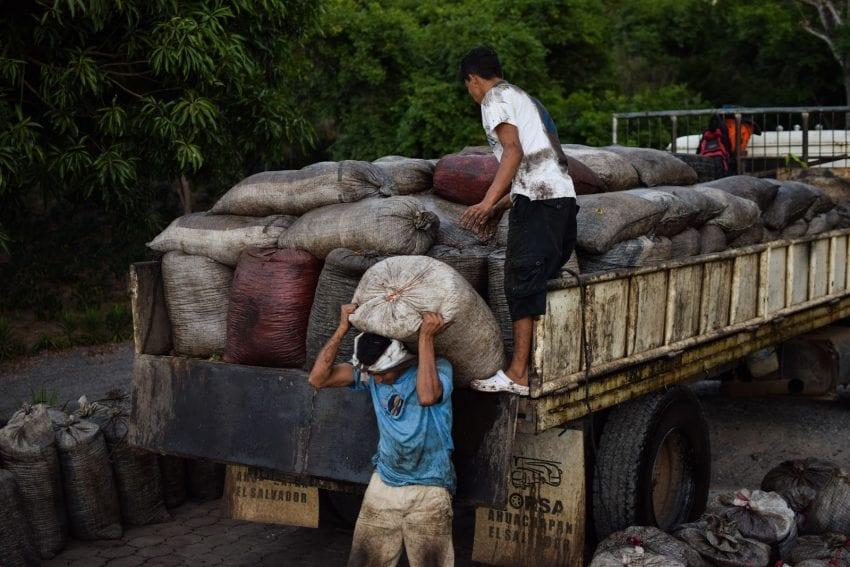 بارگیری کیسه های قهوه در یک کامیون