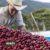 بردگی و اسپشالتی: بحث در مورد تاریخچه سیاه قهوه