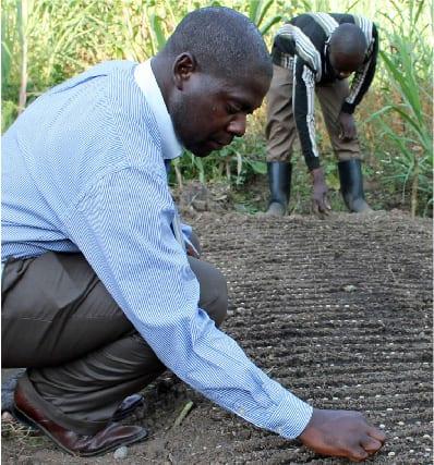 تولیدکنندگان در منطقه کیوو قهوه می کارند