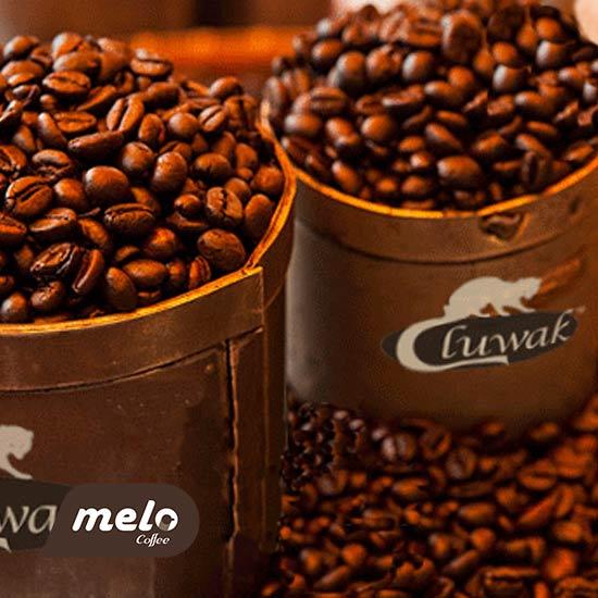قهوه عاج سیاه
